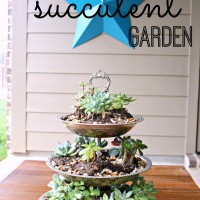 Three Tiered Succulent Garden